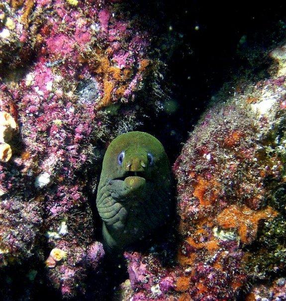morey - Sea of Cortez
