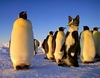Undercover Antarctic Penguin Research