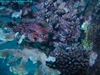 Frogfish.....turn your head to the left and look at him sideways - jdhallchgo