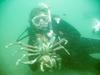 Crazy Crabs Laguna Shaw`s Cove