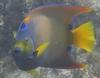Fish are camera hams too!