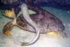 4` turtle