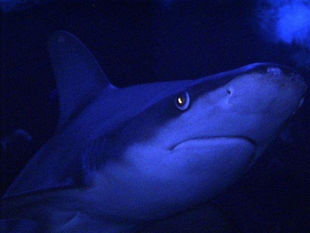 Shark in Long Beach, CA