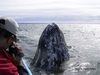 Friend Steve photographing spy-hopping whale in Baja