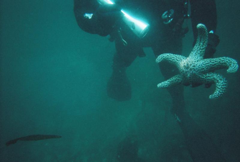 Starfish at La Jolla cove