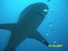 Shark Excursion - Roatan, Honduras Jan `07