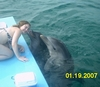 My daughter Kelly, Dolphin Training in Roatan Jan 2007