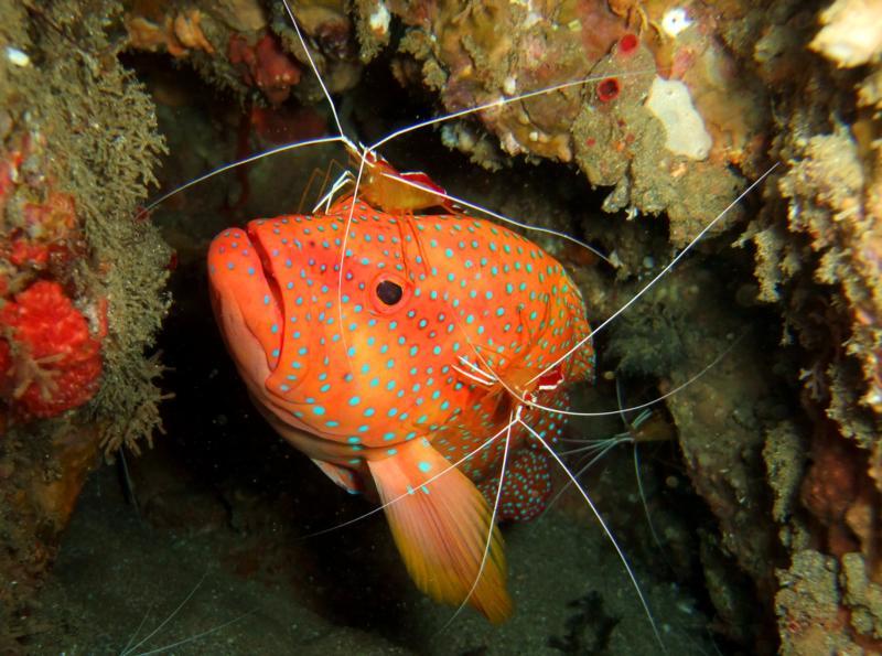 Sodwana Bay, Stringer Reef, South Africa