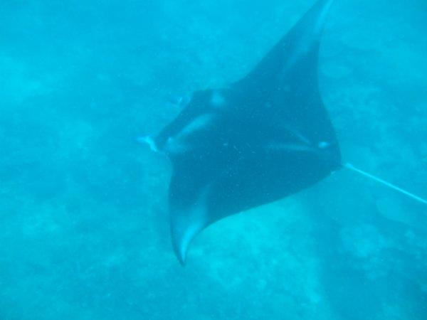 Manta with Mad Fish Dive Centre, FIji