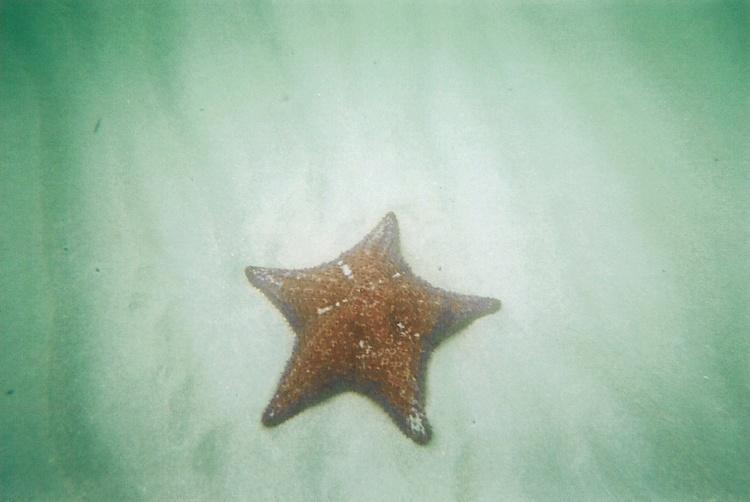 Star fish in Dania, Florida.