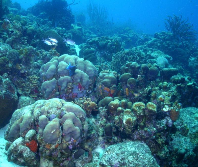Bonaire reef, Buddy Reef
