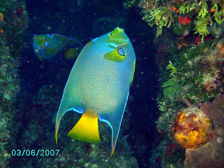 Angle Fish Cozumel