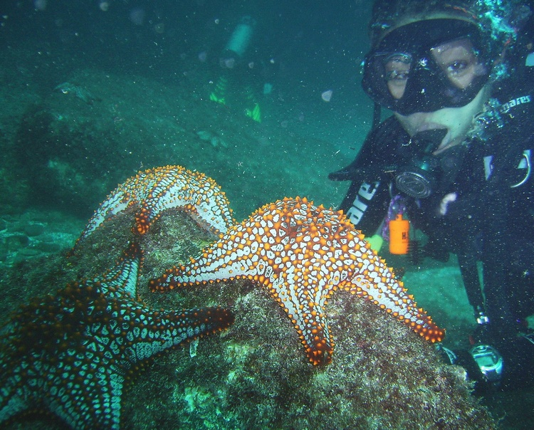 Starfish and me! Loreto Nov. 2, 2007