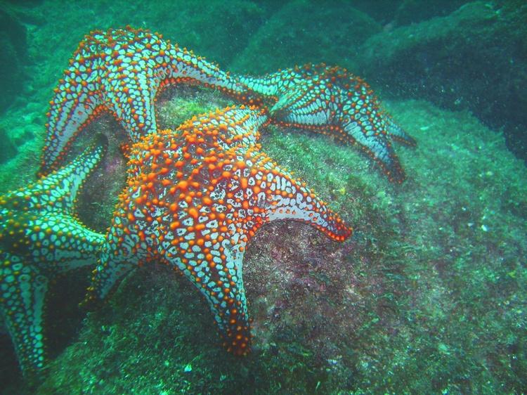 Starfishies : Loreto, Baja Mex. Nov. 2, 2007