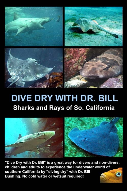 My upcoming DVD on Sharks & Rays to be released Feb 2008