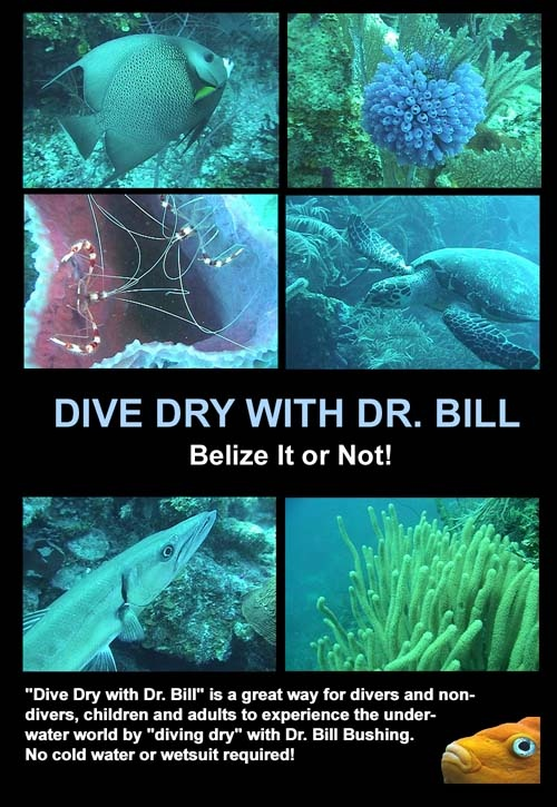 My Belize it or Not DVD cover