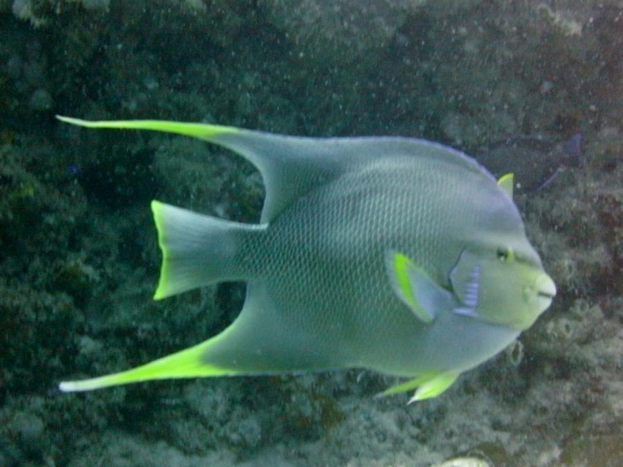Kyalami charter dive