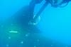 Taging Whaleshark Utila