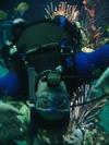 DiveQuest - Living Seas Aquarium, EPCOT - Walt Disney World, Dec 23, 2003