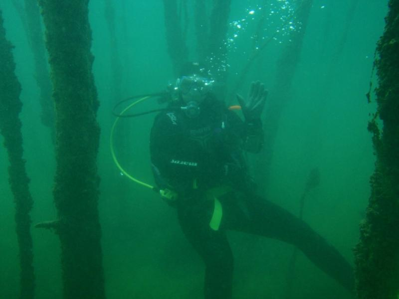 Gilboa Quarry - underwater forest