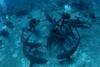 Shark dive from Nassau November 2006