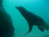 cabo 2007 sea lion