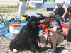 Training With/SAR Dogs of Colorado