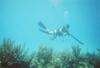 Spearfishing 4 miles off Islamorada