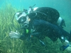 Hello... DiveBuddies.... I am drifting....