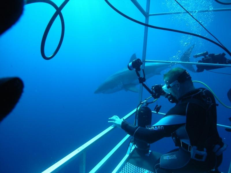 The deep cage. Great White - Oct 2009