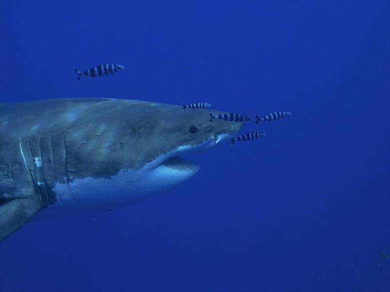 """Lucy came with her """"bling"""" LOL Great White - Oct 2009"""