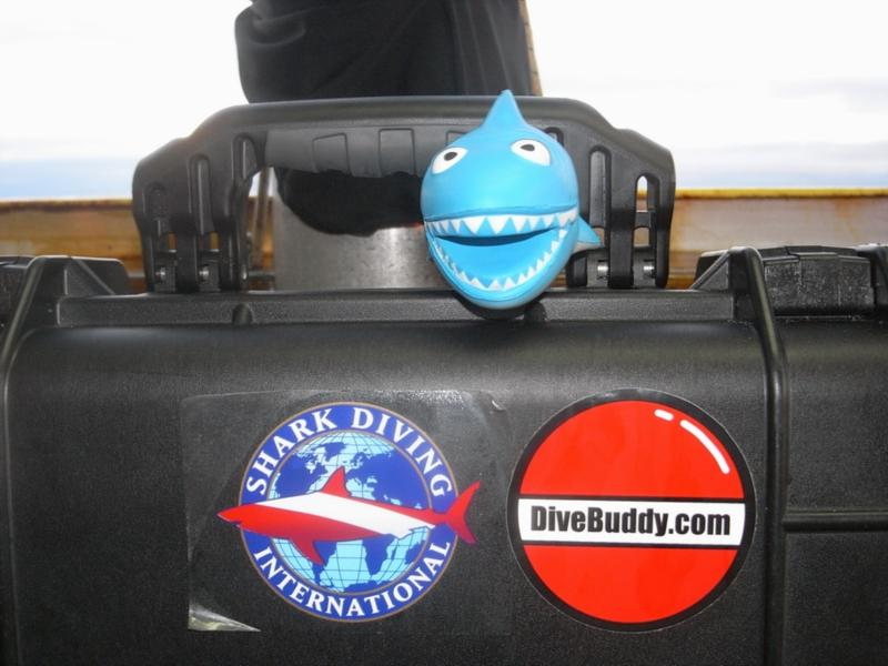 """Our mascott!  He was on guard in the camera bucket.  And of course """"DiveBuddy"""" loves sharkin' too!"""