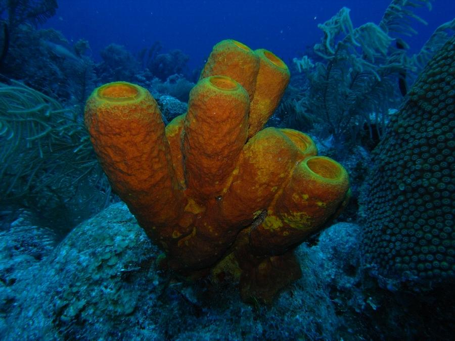 Big tube sponges