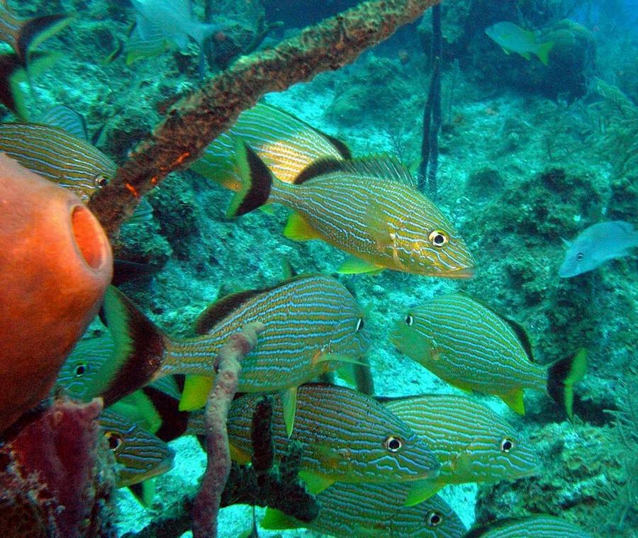 Fish with orange sponge