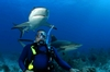 Stewart Cove Shark Dive 2005