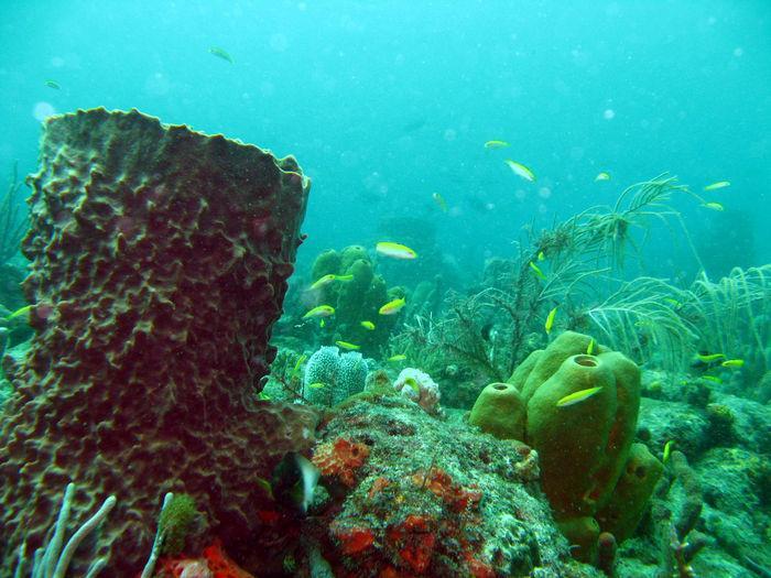 Reef S.E. Florida