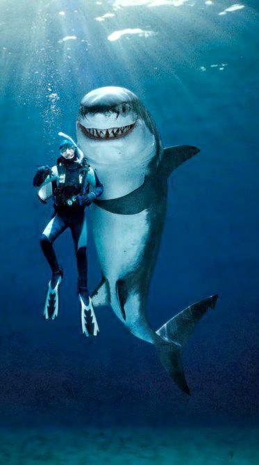 Dive Buddy?