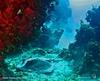 """""""Alien Ray""""   Andros Island, Bahamas"""