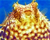 Blowfish, Sandy Cay Reef, Negril Jamaica