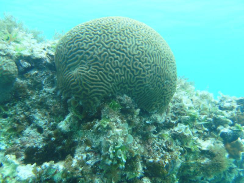 Big Brain in Guana Cay Bahamas