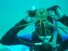 My son.... lobster-boy not spider-pig.  Channel Islands Dec 2007