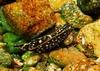 """A """"Novanax"""" nudibranch eater"""