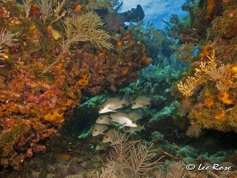Key Largo Reef Scene