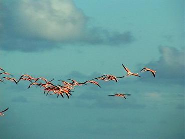Flamingos Aloft