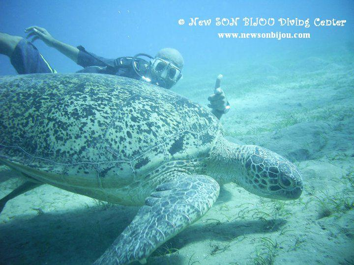 me & giant turtle
