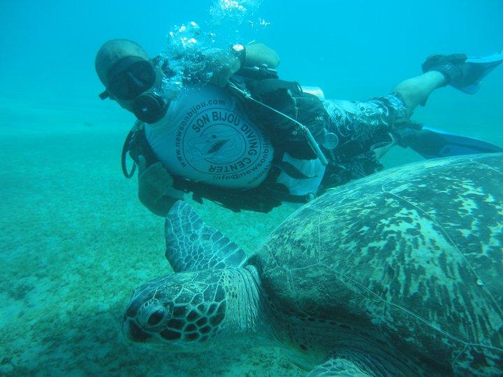 me diving with giant turtle in Red Sea