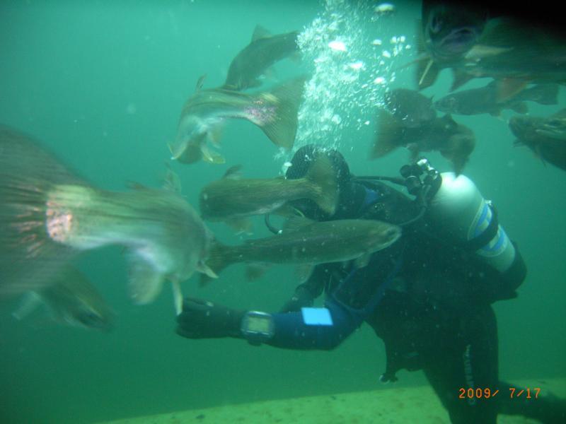 Feeding the Fish at Gilboa