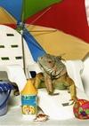 Gotta love my lizard!