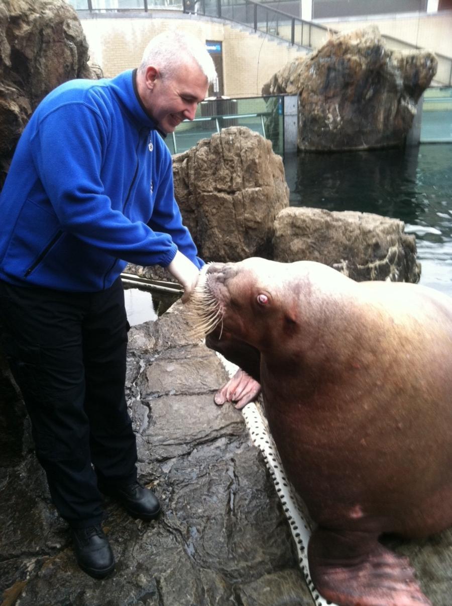 Feeding Nuka at NY Aquarium