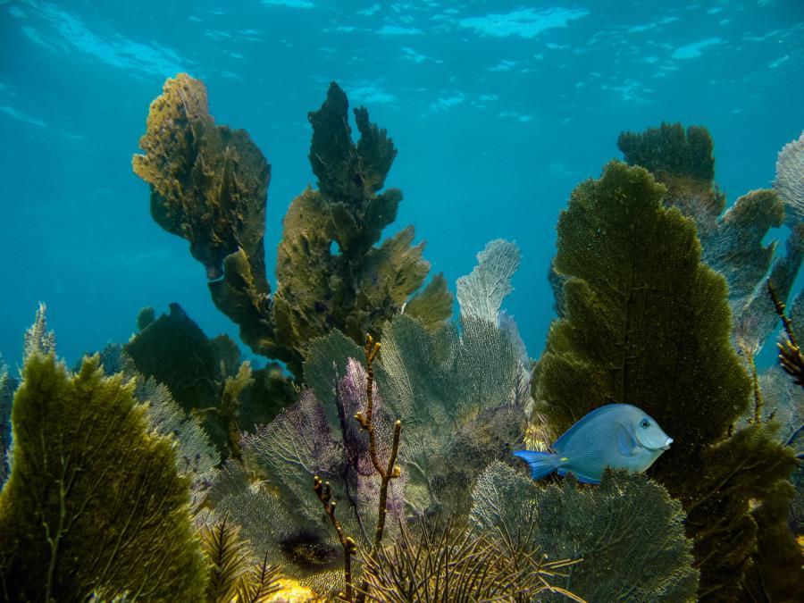 The Keys Reef